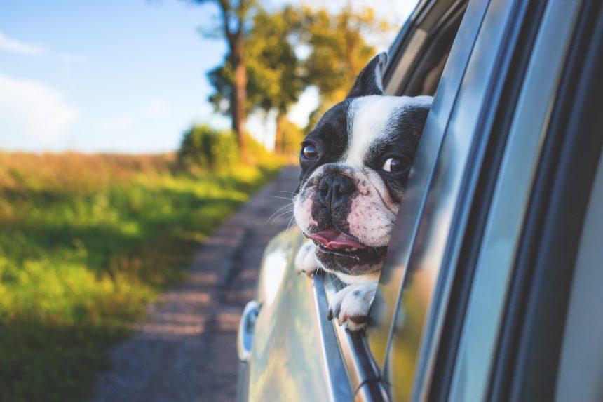 Pārvākšanās ar suni – kas jāņem vērā?